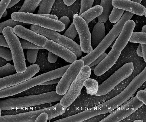 Global travellers vulnerable to drug-resistant bacteria: study